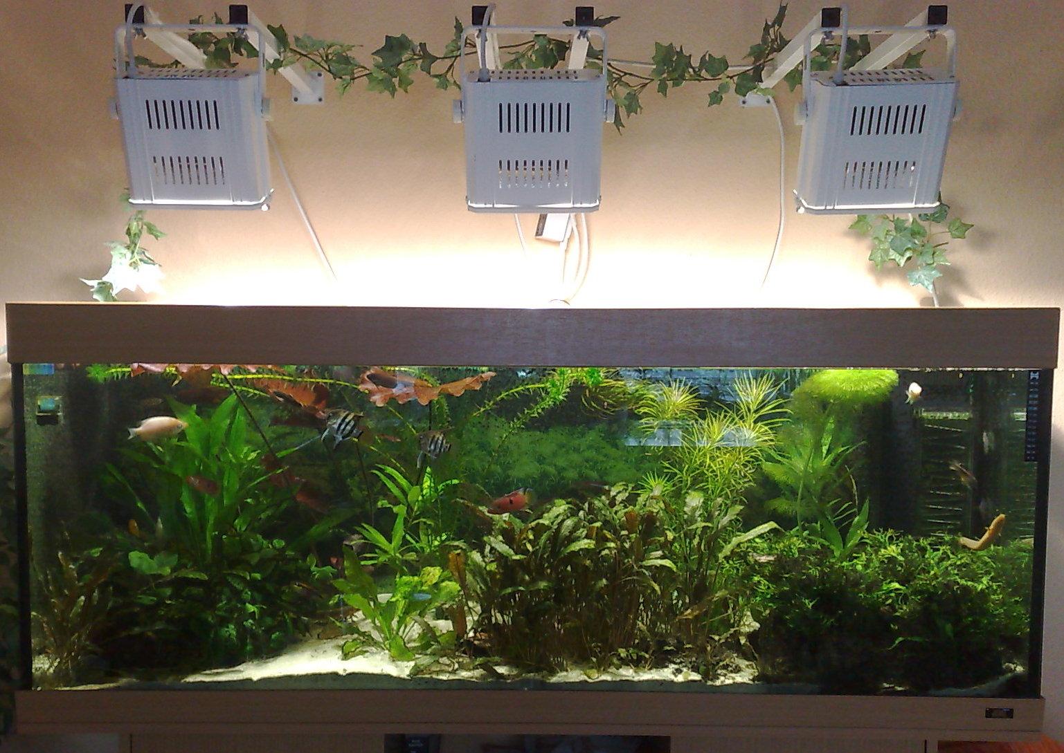D finition hqi vetofish for Aquarium ouvert