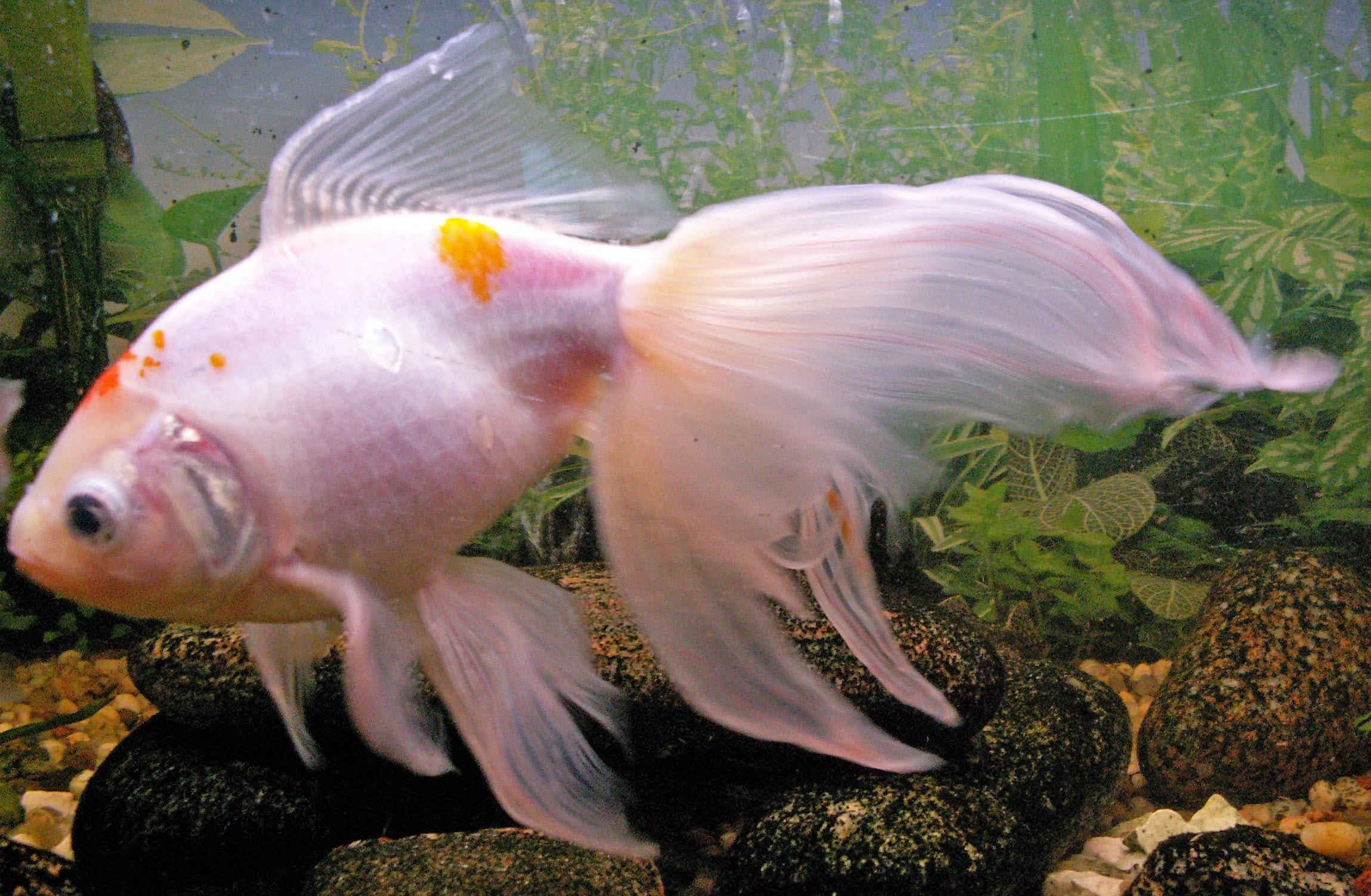 d finition queue de voile vetofish