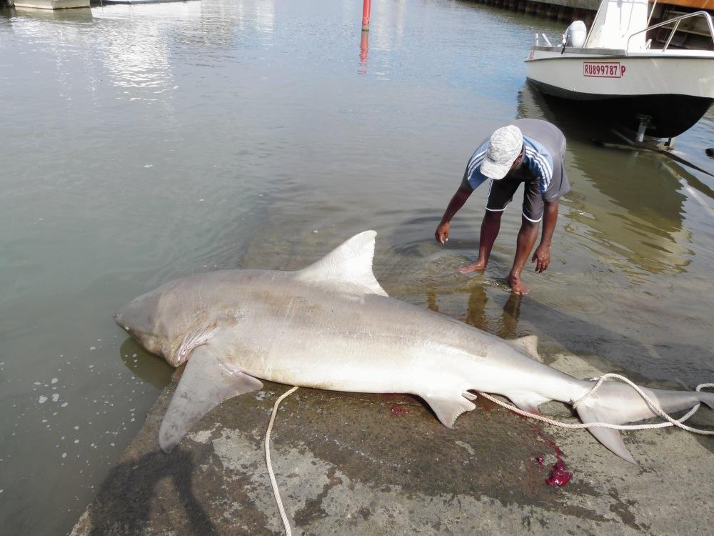 La pêche krasnodar sur la rivière kouban