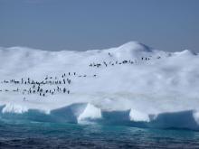 Mission antarctique (Fondation Prince Albert II de Monaco)