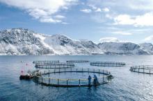 Cages de saumons dans un Fjord en Norvège