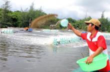 Aquaculture Vietnam