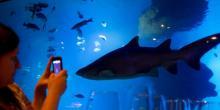 Aquarium public