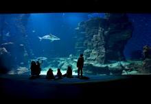 Bassin Océan de l'aquarium Mare Nostrum (Montpellier)