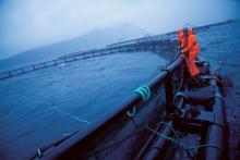 Cage en mer de Cermaq pour l'élevage de saumon atlantique