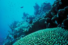 Coral Reef in Florida by Jerry Reid, WO-3540-CD42A, U.S. Fish and Wildlife Service