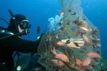 Gérard Carrodano en train de pêcher le 4 octobre 2014 au large de la Ciotat (AFP - Boris Horvat)