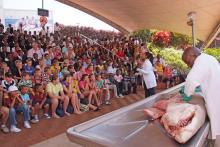 KwaZulu-Natal Sharks Board