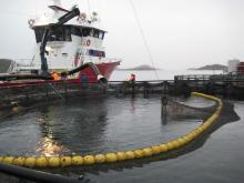 Ferme de saumons en Norvège