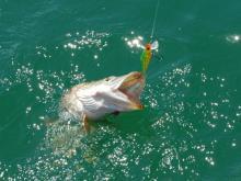 Pêche du Brochet