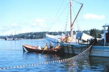 Bateau de pêche de hareng