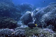 Récif au Kenya