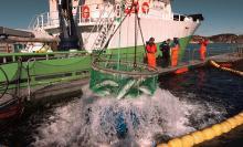 Sortie de cage des saumons norvégiens
