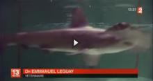 Requins-marteaux Cinéaqua Trocadéro Paris