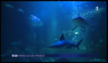 Requin gris avant sa capture (diagnostic de gestation par échographie)