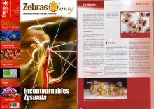 ZebrasO'mag n°02 - Juin 2007 -  Les maladies bactériennes en aquarium récifal