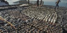 Ailerons de requins sèchent sur un toit à Hong-Kong