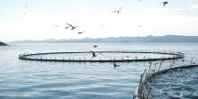 Cage en mer en europe (crédit : European Aquaculture)