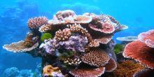 Les aérosols émis par les océans sont pris dans la circulation atmosphérique. Les précurseurs de ces aérosols, les DMSP, sont produits par les algues marines mais aussi par les coraux. © Barabuski, Toby Hudson