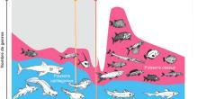 Changement de diversité durant l'intervalle recouvrant le Permien et le Trias. Les poisons cartilagineux (en bleu) étaient très diversifiés durant le Permien. Cependant, après une baisse de diversité des poissons cartilagineux durant l'extinction du Permien moyen, les poissons osseux (en rose) se diversifièrent massivement durant le Trias, notamment après l'extinction de masse Permien-Trias. © C. Romano/A. Brayard