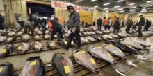 Marché de Thon rouge au Japon