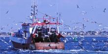 Rejets de prises en mer