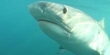 Pêche de Requin à la Réunion