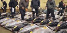 Marché Thon rouge au Japon