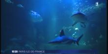 Requin gris avant sa capture (diagnostic de gestation par échographie)